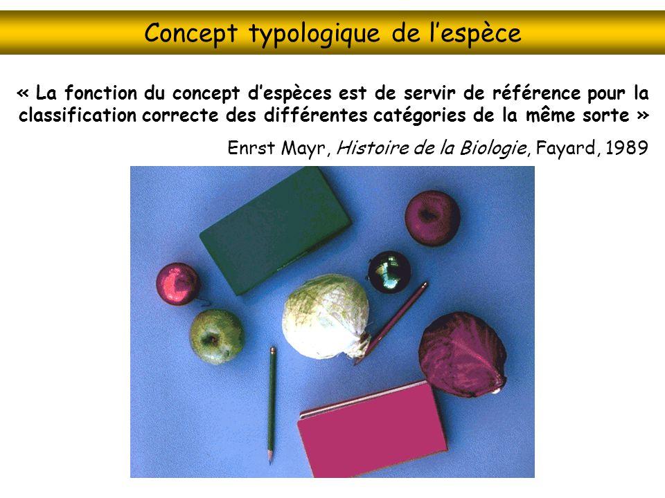 Concept typologique de l'espèce