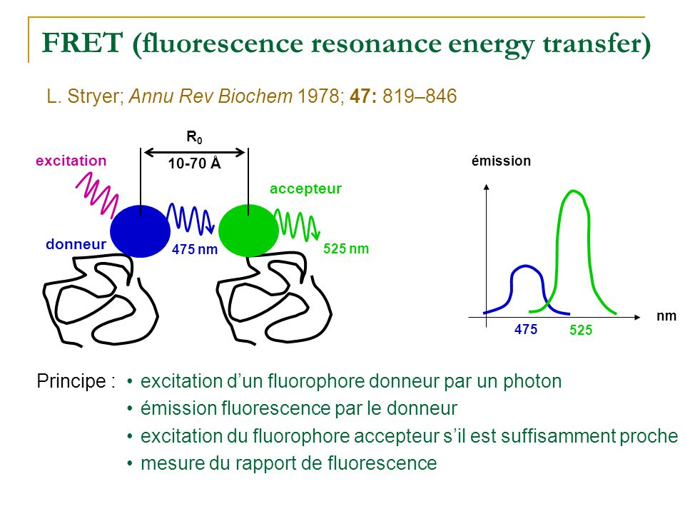 FRET (fluorescence resonance energy transfer)
