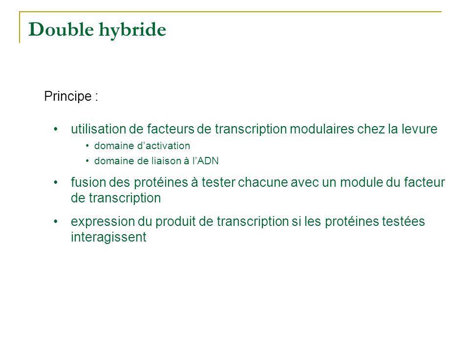Double hybride Principe :