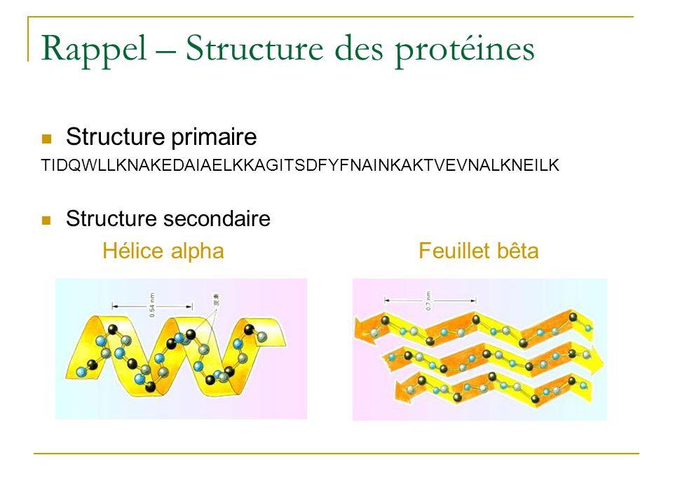 Rappel – Structure des protéines
