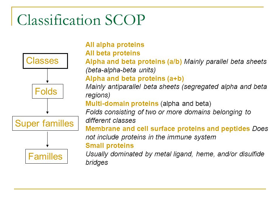 Classification SCOP Classes Folds Super familles Familles