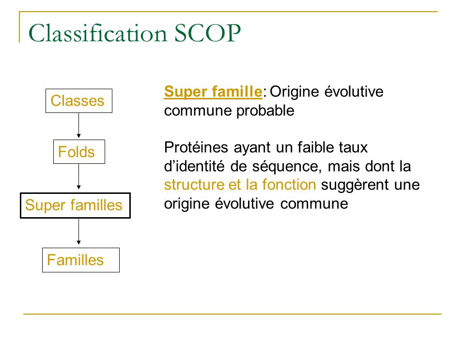 Classification SCOP Super famille: Origine évolutive commune probable