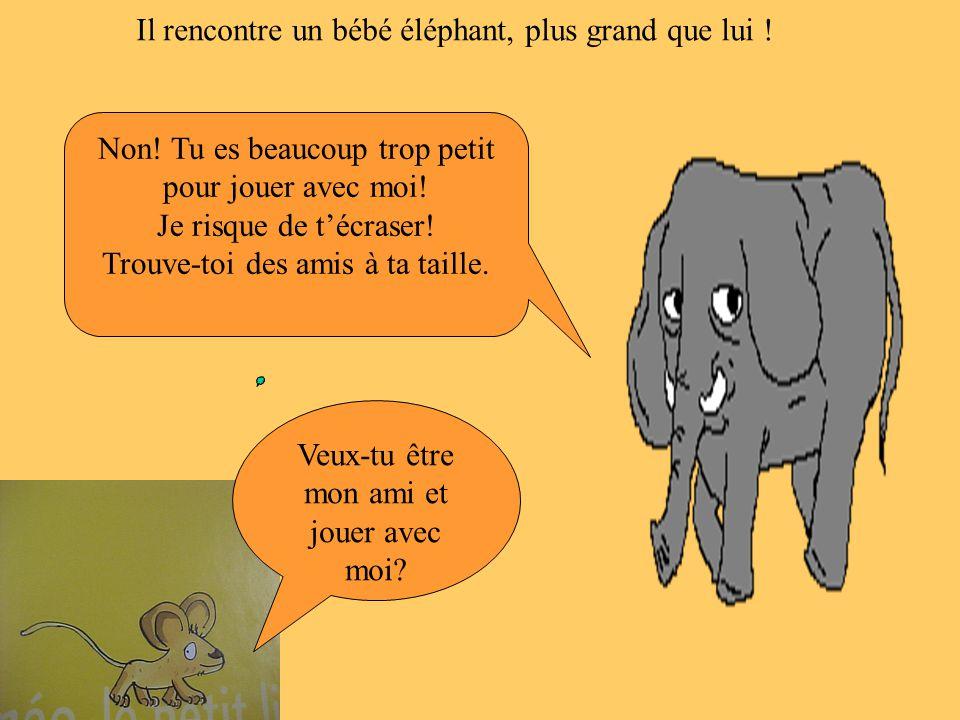 Il rencontre un bébé éléphant, plus grand que lui !
