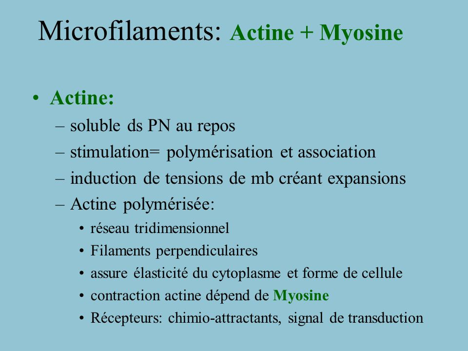 Microfilaments: Actine + Myosine