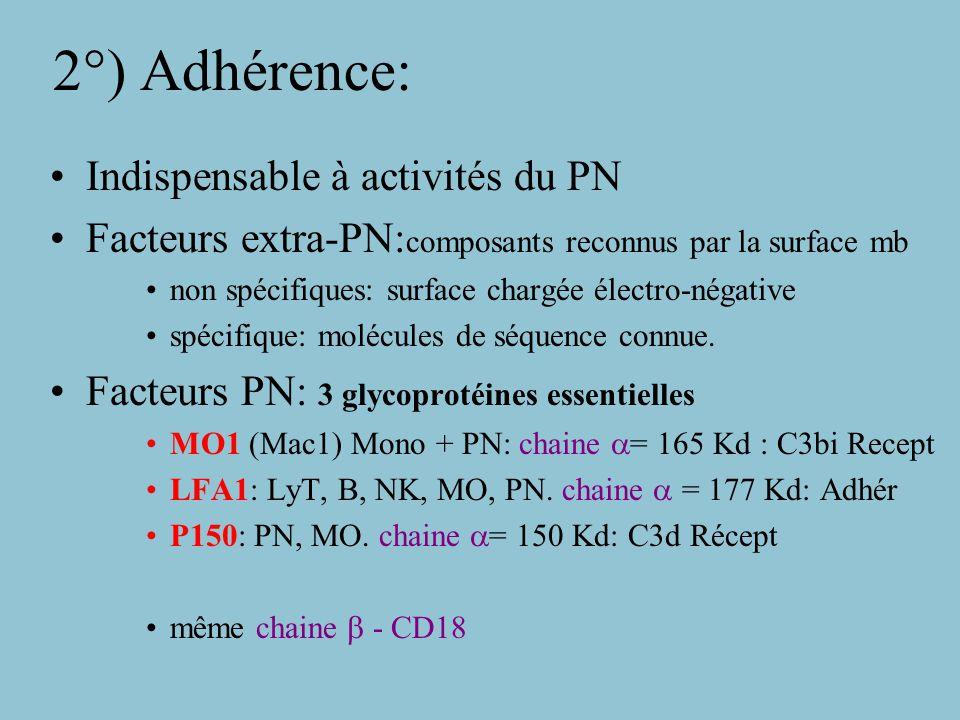 2°) Adhérence: Indispensable à activités du PN