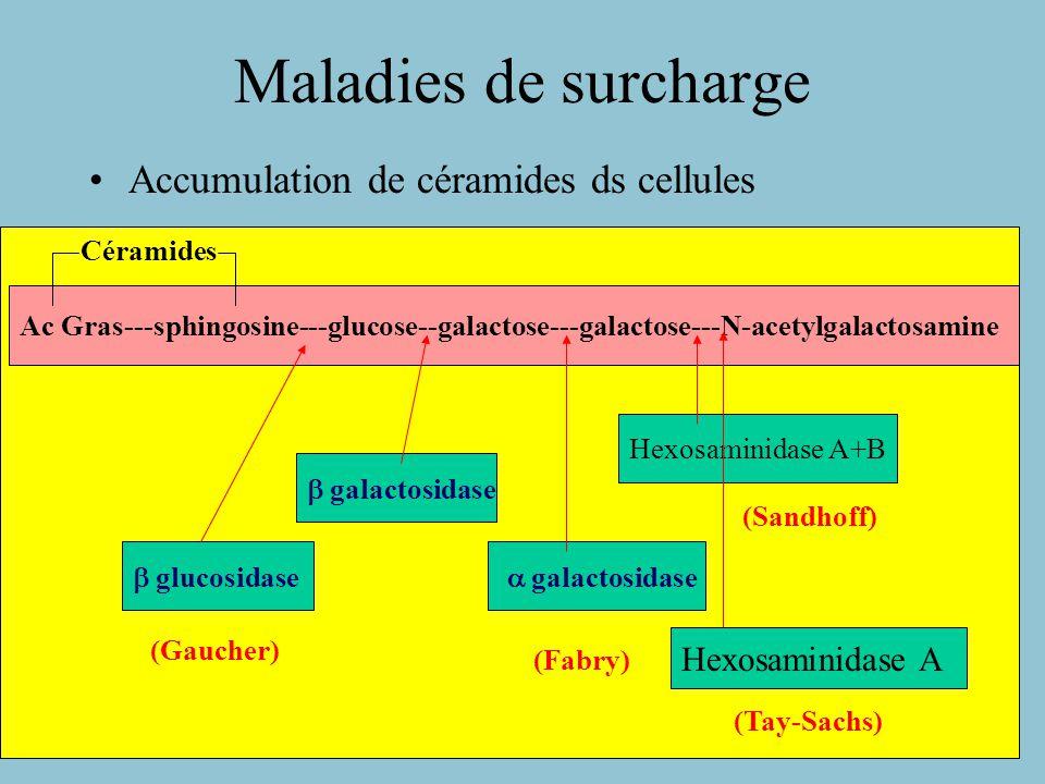 Maladies de surcharge Accumulation de céramides ds cellules