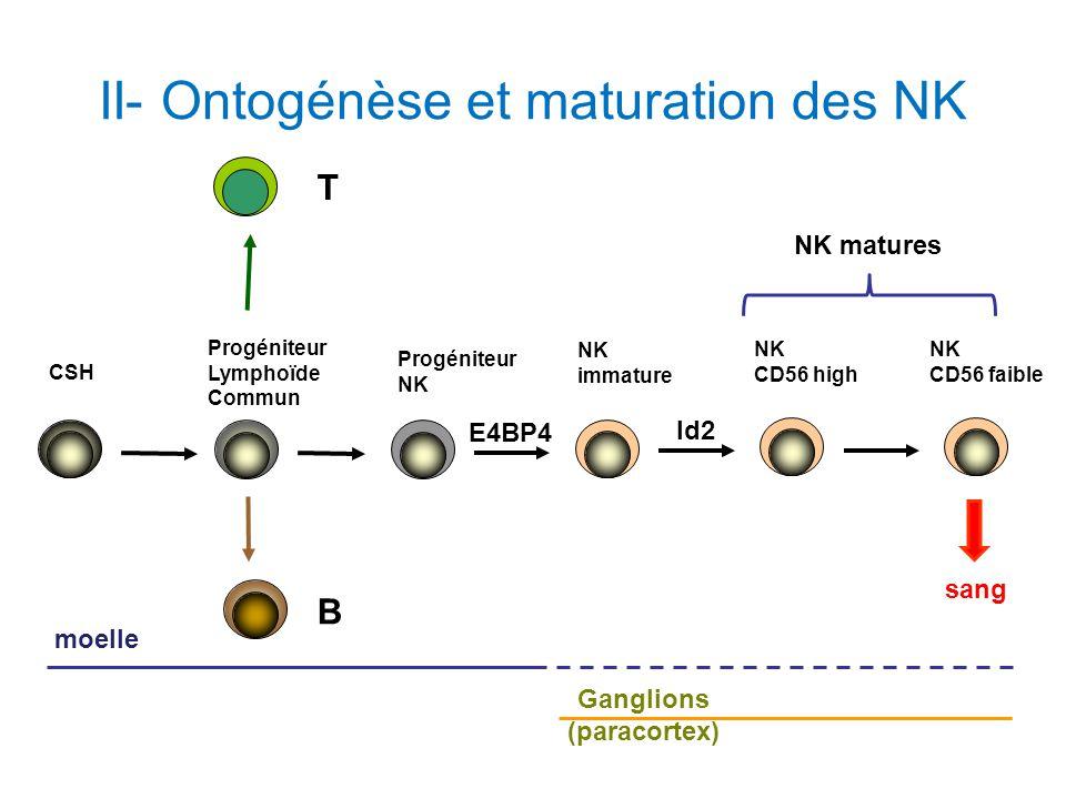 II- Ontogénèse et maturation des NK