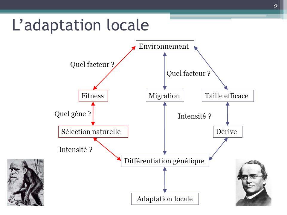 L'adaptation locale Environnement Migration Taille efficace