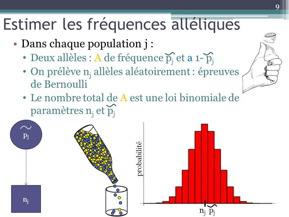 Estimer les fréquences alléliques