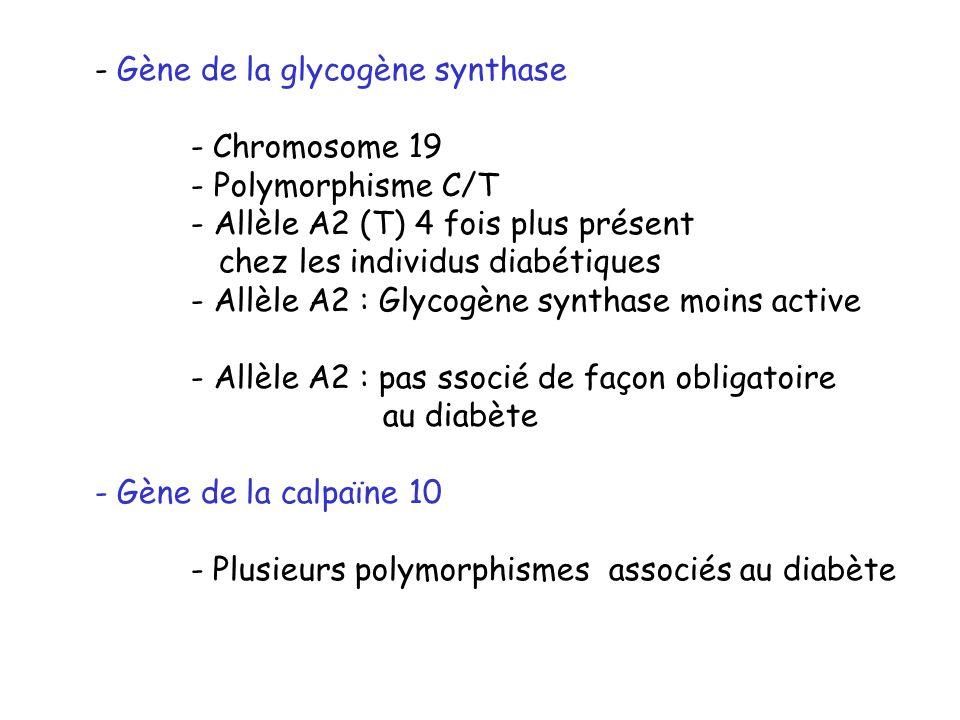 Gène de la glycogène synthase