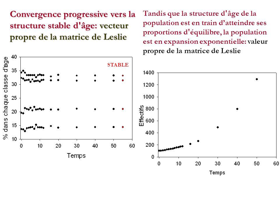 Convergence progressive vers la structure stable d âge: vecteur propre de la matrice de Leslie