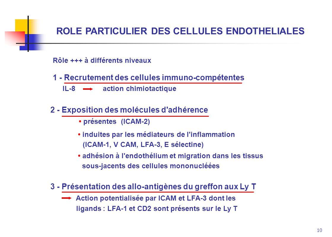 ROLE PARTICULIER DES CELLULES ENDOTHELIALES