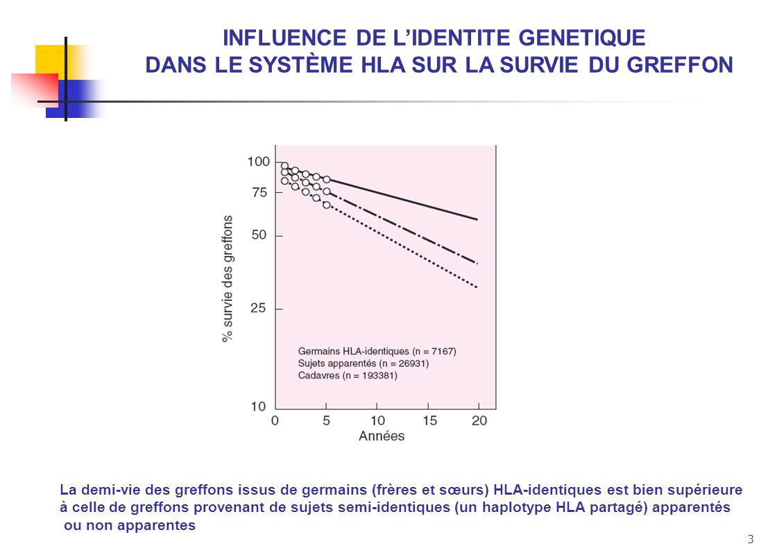 INFLUENCE DE L'IDENTITE GENETIQUE