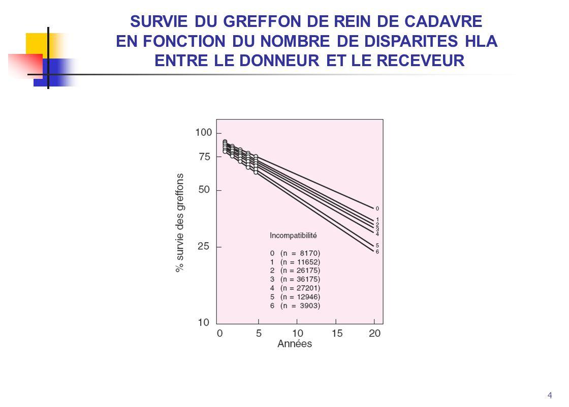 SURVIE DU GREFFON DE REIN DE CADAVRE