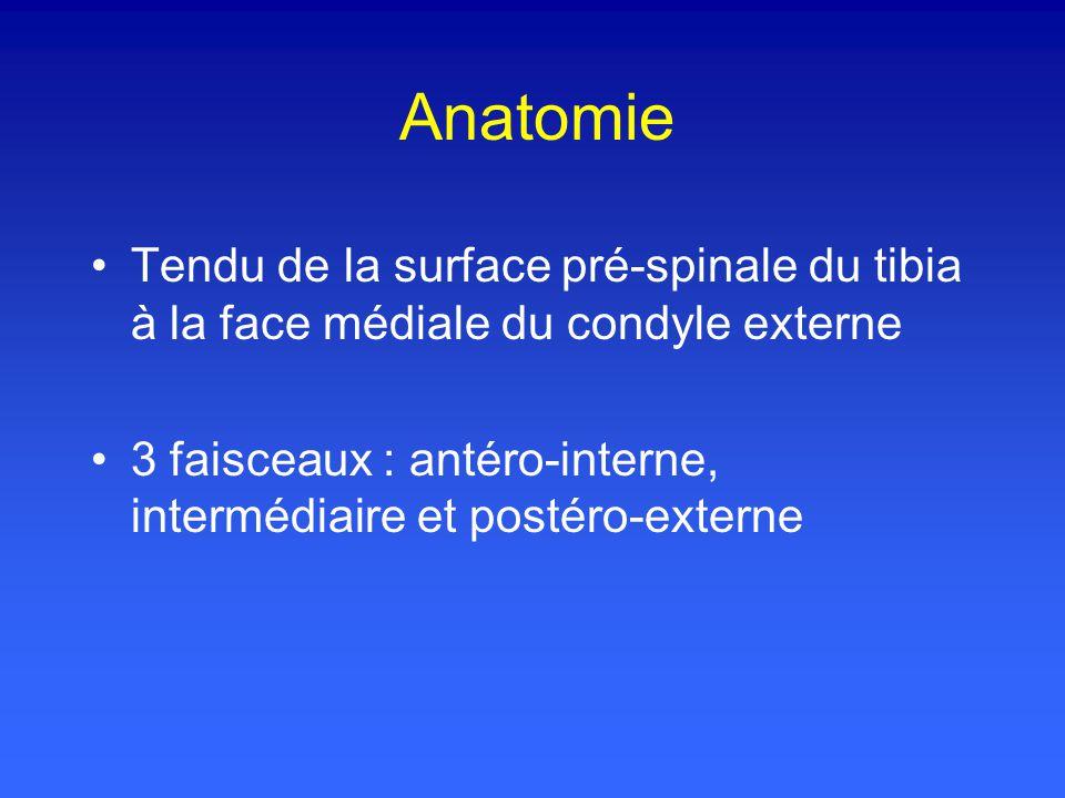 Anatomie Tendu de la surface pré-spinale du tibia à la face médiale du condyle externe.