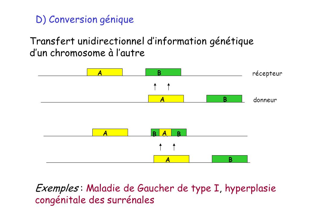 Transfert unidirectionnel d'information génétique