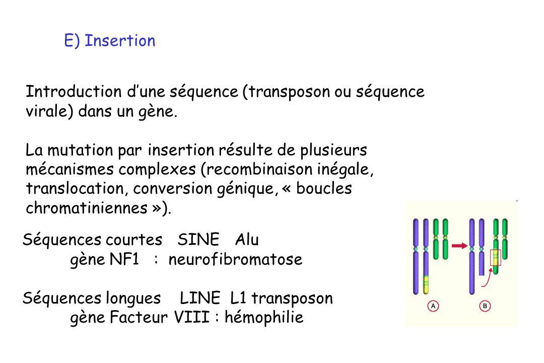 E) Insertion Introduction d'une séquence (transposon ou séquence. virale) dans un gène. La mutation par insertion résulte de plusieurs.