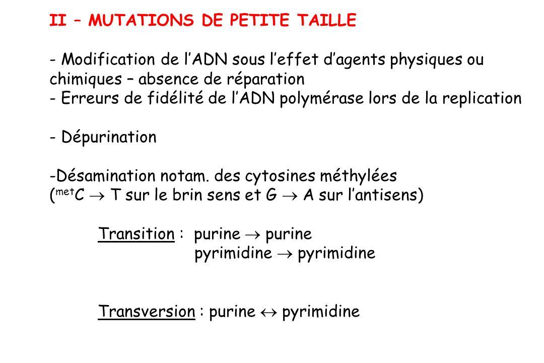II – MUTATIONS DE PETITE TAILLE