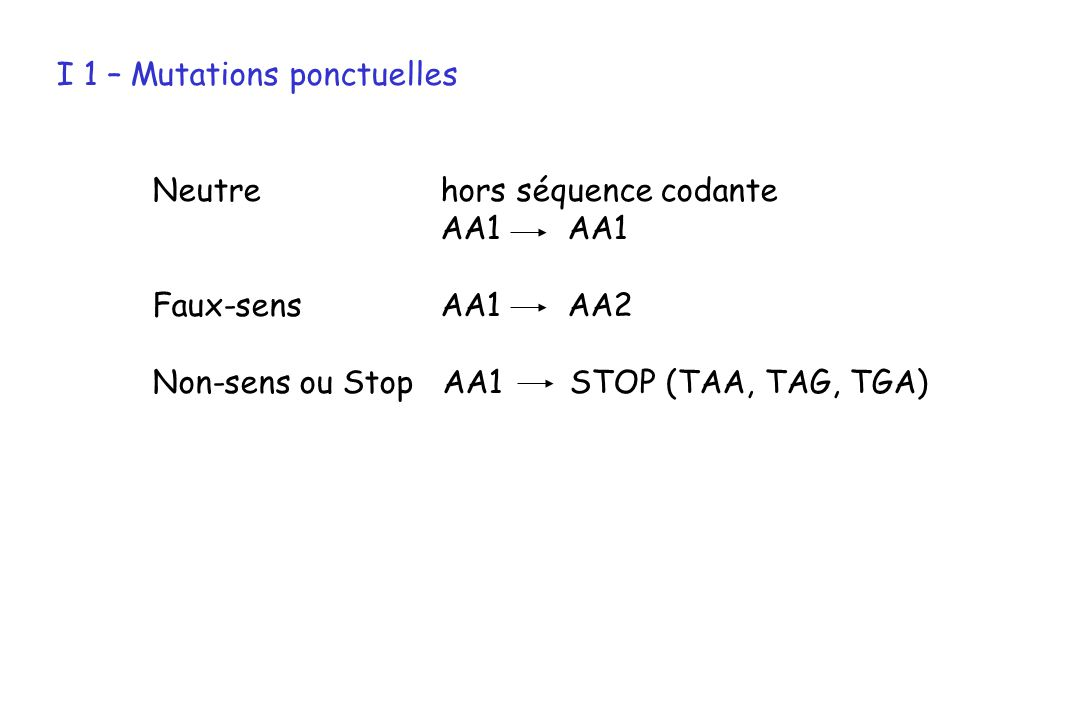 I 1 – Mutations ponctuelles