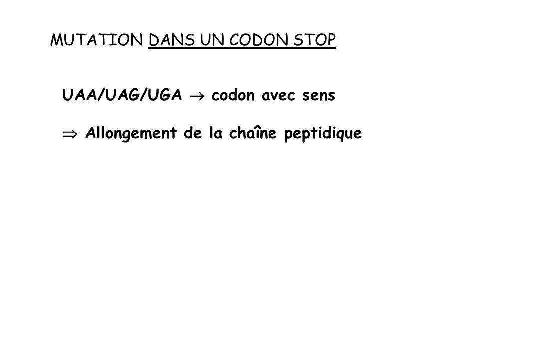 MUTATION DANS UN CODON STOP