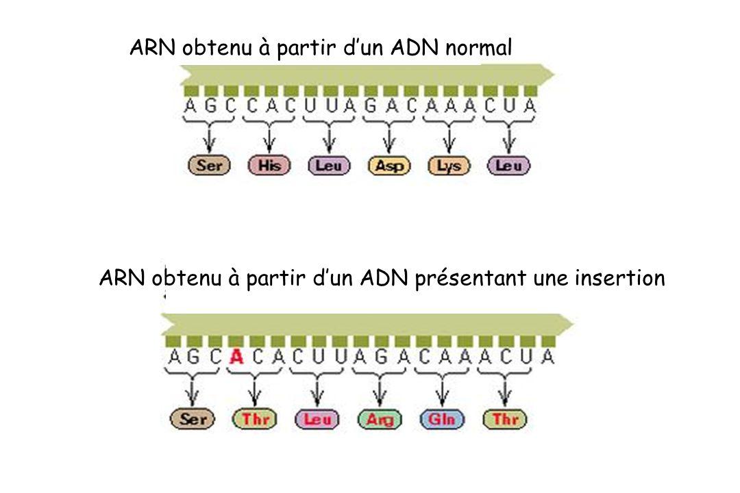 ARN obtenu à partir d'un ADN normal