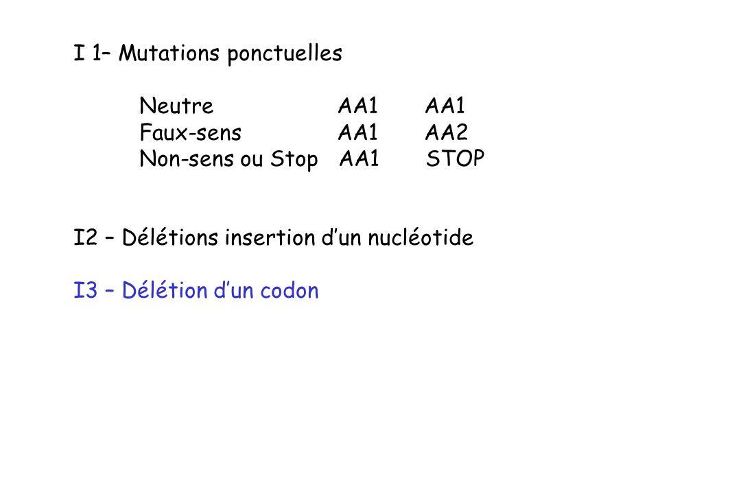 I 1– Mutations ponctuelles