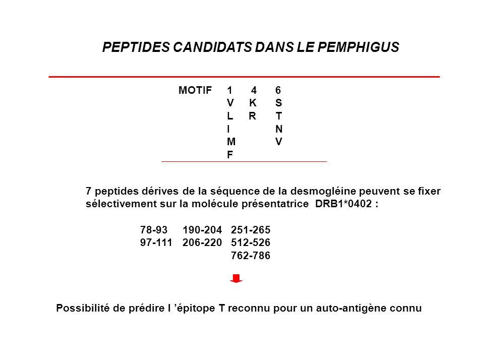 PEPTIDES CANDIDATS DANS LE PEMPHIGUS