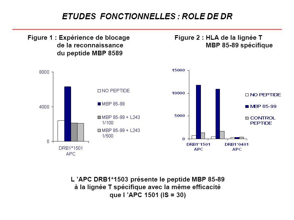 ETUDES FONCTIONNELLES : ROLE DE DR