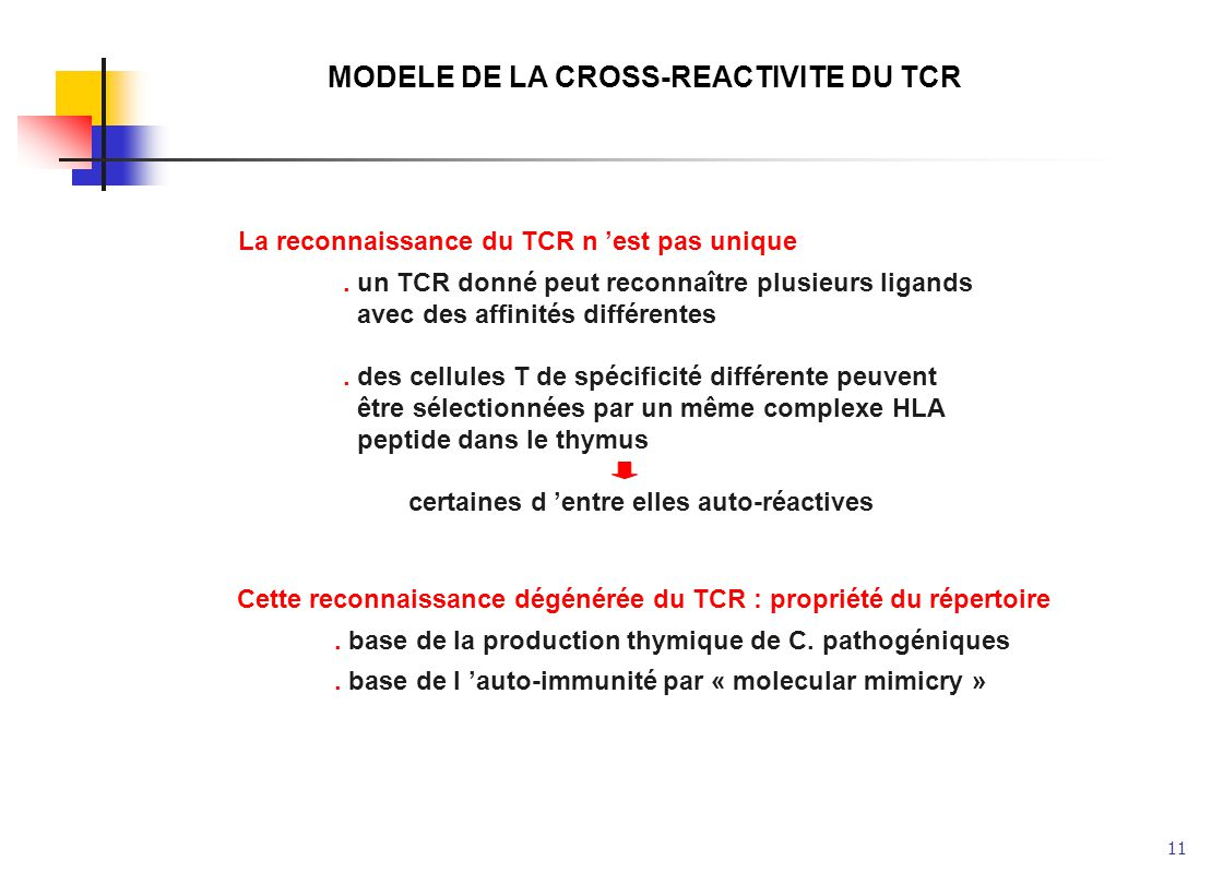 MODELE DE LA CROSS-REACTIVITE DU TCR