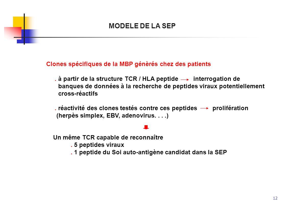 MODELE DE LA SEP Clones spécifiques de la MBP génèrés chez des patients. . à partir de la structure TCR / HLA peptide interrogation de.