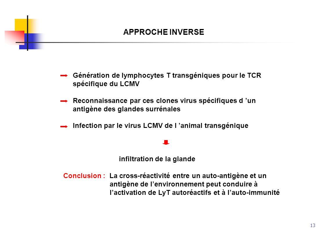 APPROCHE INVERSE Génération de lymphocytes T transgéniques pour le TCR