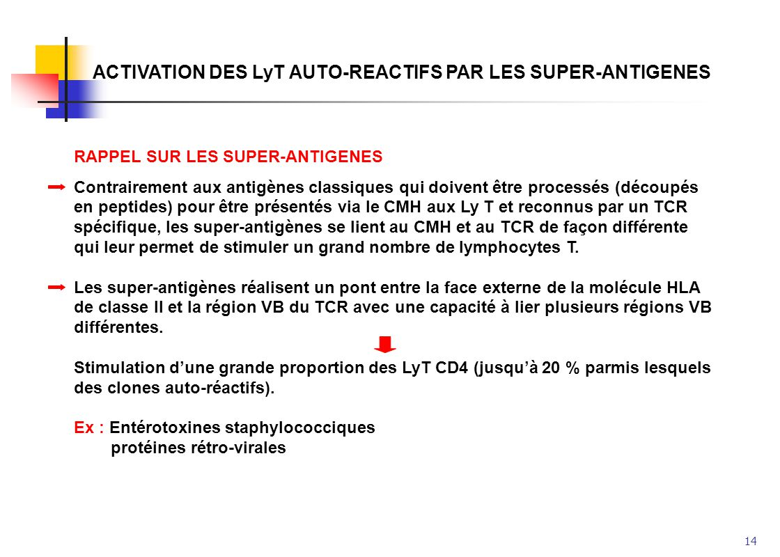 ACTIVATION DES LyT AUTO-REACTIFS PAR LES SUPER-ANTIGENES