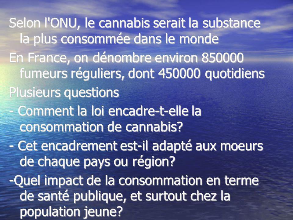 Selon l ONU, le cannabis serait la substance la plus consommée dans le monde
