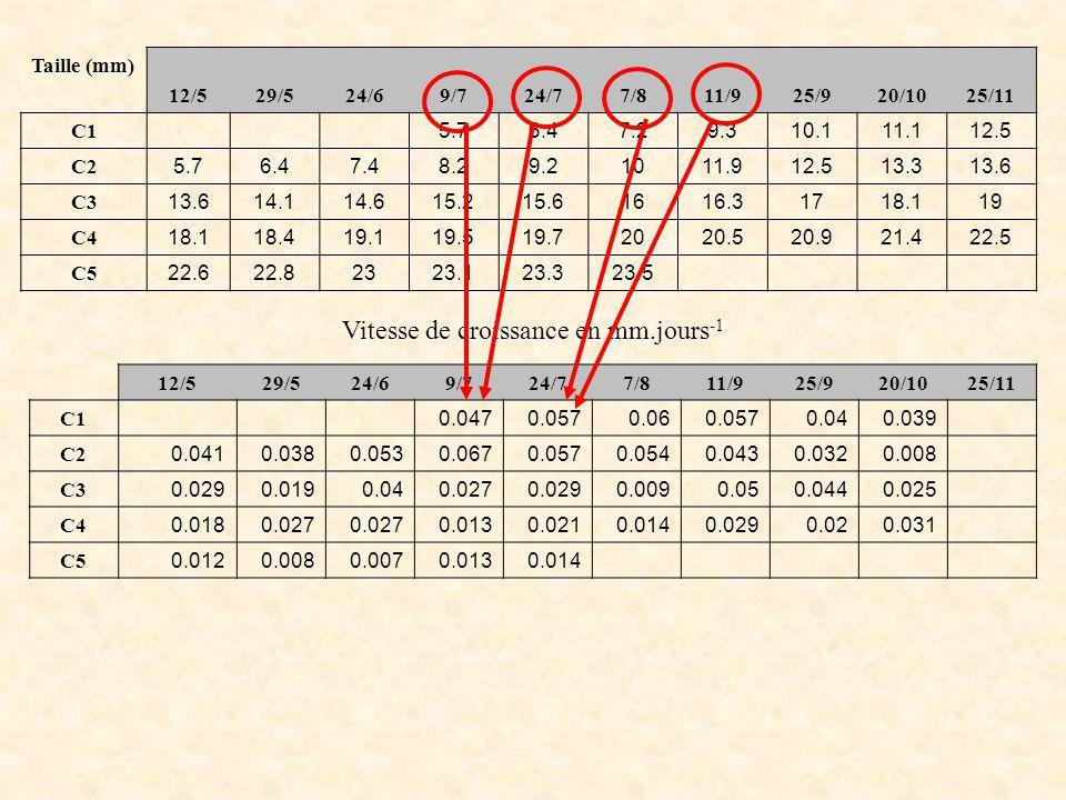 Vitesse de croissance en mm.jours-1