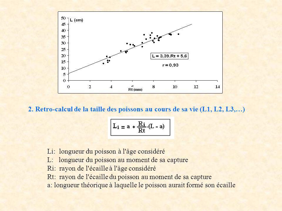 2. Retro-calcul de la taille des poissons au cours de sa vie (L1, L2, L3,…)