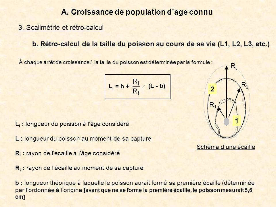 A. Croissance de population d'age connu