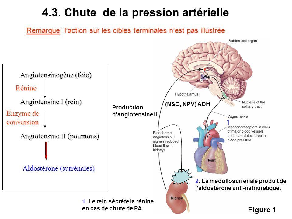 4.3. Chute de la pression artérielle