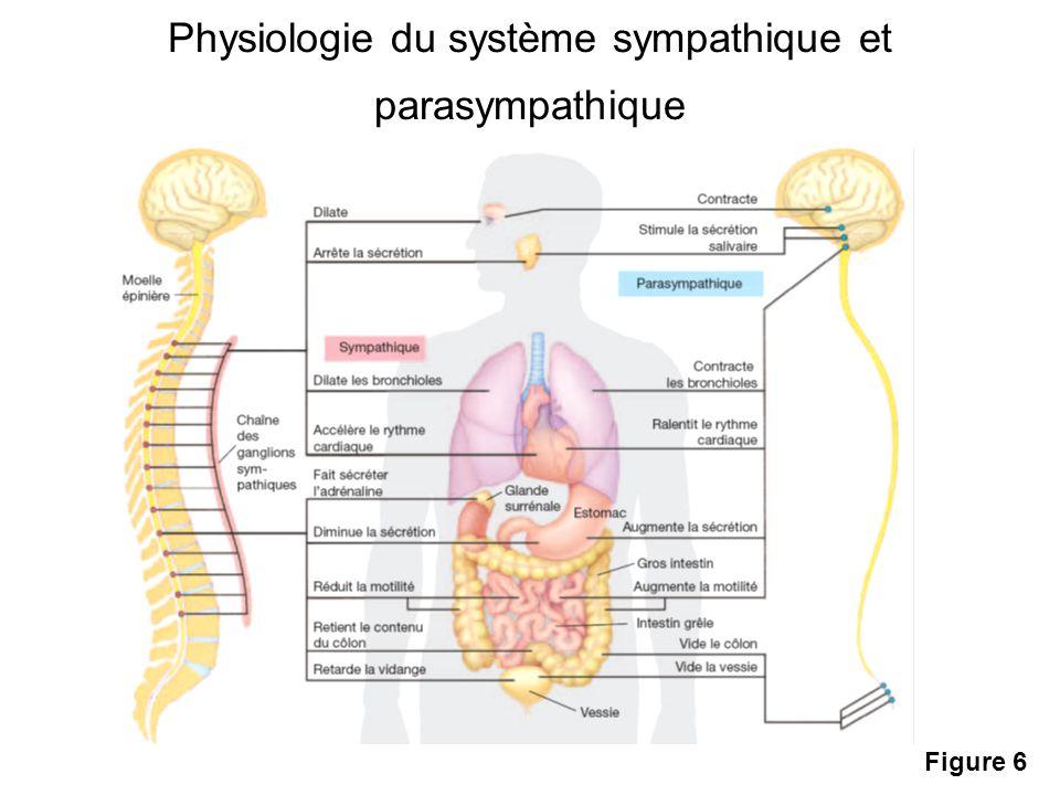 Physiologie du système sympathique et parasympathique