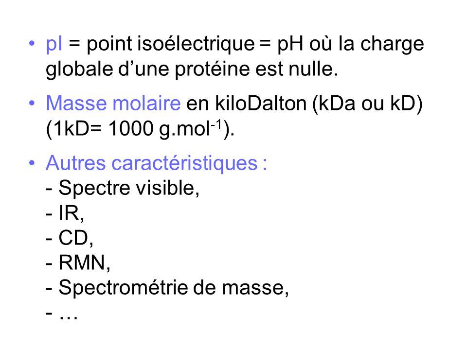 pI = point isoélectrique = pH où la charge globale d'une protéine est nulle.