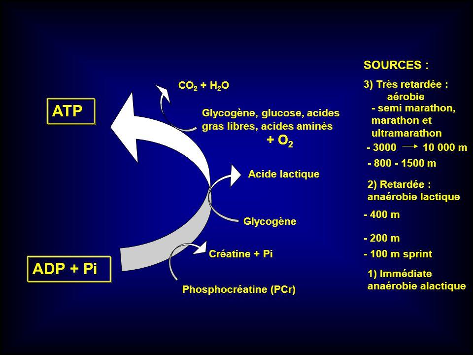 ATP ADP + Pi + O2 SOURCES : CO2 + H2O 3) Très retardée : aérobie