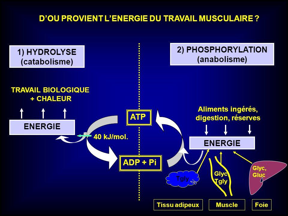 D'OU PROVIENT L'ENERGIE DU TRAVAIL MUSCULAIRE