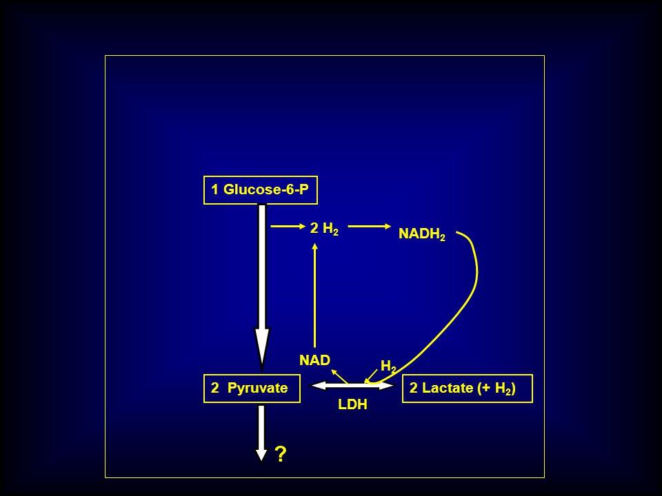 1 Glucose-6-P 2 H2 NADH2 NAD H2 2 Pyruvate 2 Lactate (+ H2) LDH