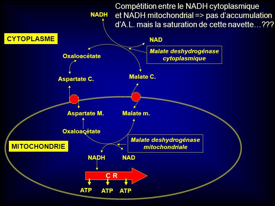 Malate deshydrogénase Malate deshydrogénase