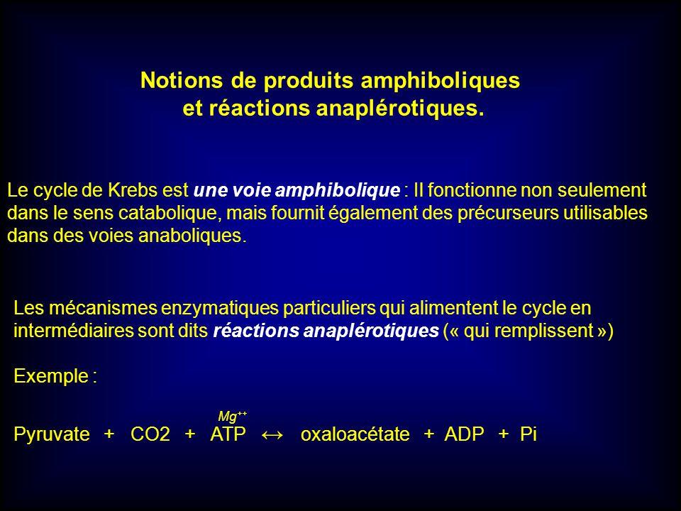 Notions de produits amphiboliques et réactions anaplérotiques.