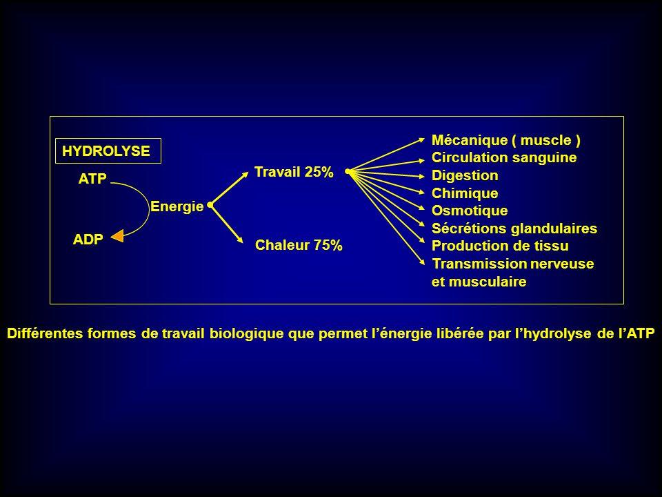 Mécanique ( muscle ) Circulation sanguine. Digestion. Chimique. Osmotique. Sécrétions glandulaires.