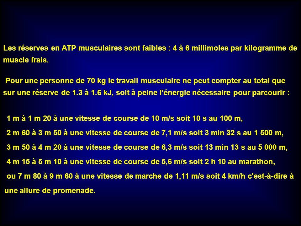 Les réserves en ATP musculaires sont faibles : 4 à 6 millimoles par kilogramme de muscle frais.