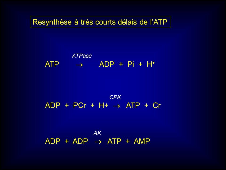 Resynthèse à très courts délais de l'ATP