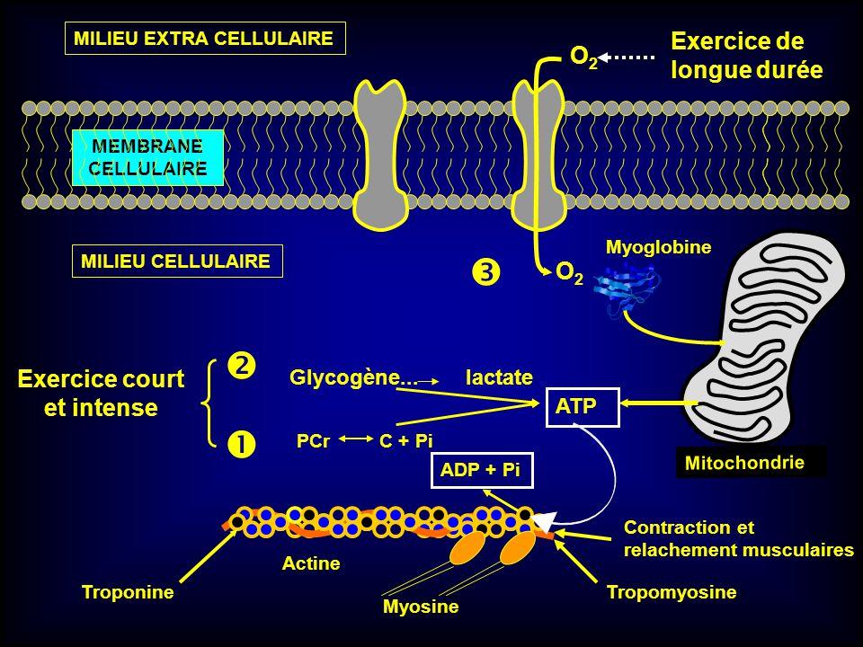 Exercice court et intense