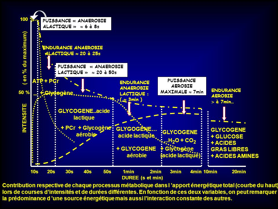 GLYCOGENE..acide lactique