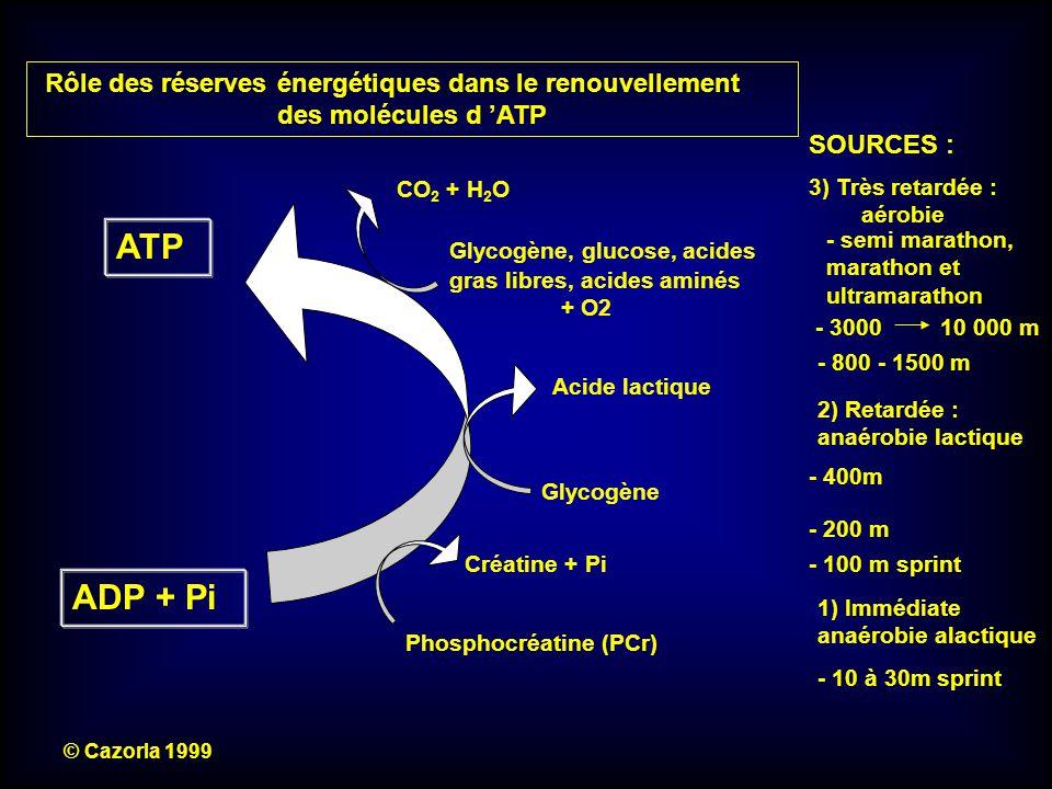 ATP ADP + Pi Rôle des réserves énergétiques dans le renouvellement